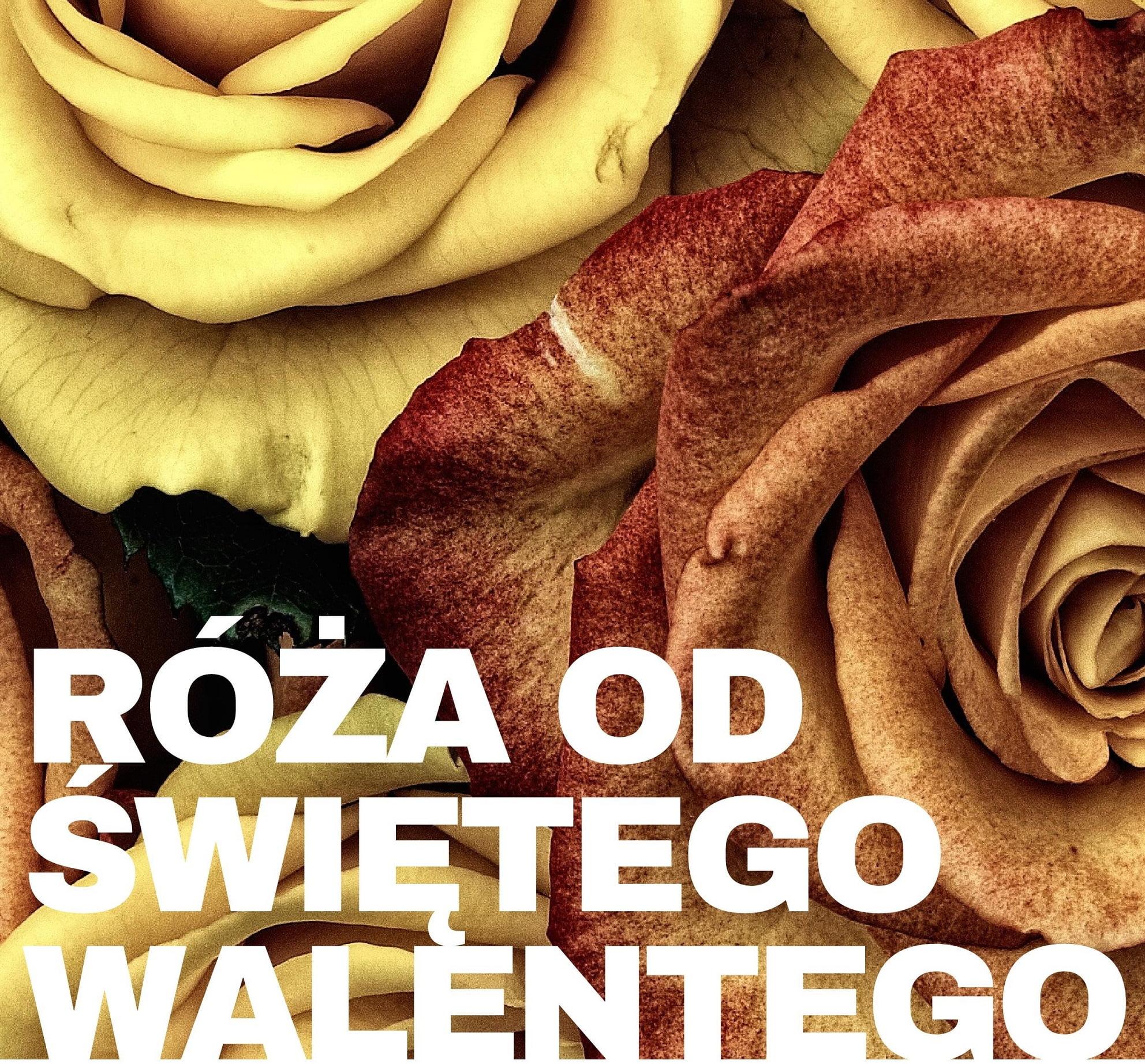 AKCJA Róża od Świętego Walentego !